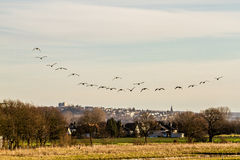 Flock of Birds. A flock of birds over this land Royalty Free Stock Photo