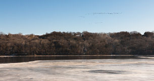 Flock of birds over partly frozen Mississippi River Stock Photo