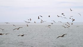 Flock of birds over sea Stock Photo