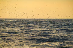 Flock of birds over sea waves Royalty Free Stock Photography