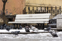 Flock of birds, pigeons in the snow in the courtyard Stock Photography