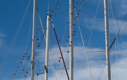 Flock of birds on sailboat rigging Royalty Free Stock Photography