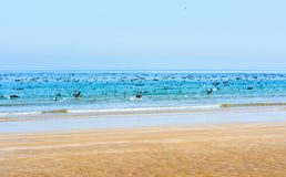 Flock of birds in the sea water by the shore Royalty Free Stock Photos