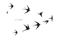 Flock of birds silhouette swallow Royalty Free Stock Images