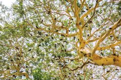 Flock of birds sitting on the big green tree from bottom royalty free stock image