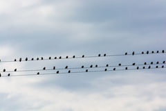Flock Of Birds Sitting On Electric Wire Royalty Free Stock Photography