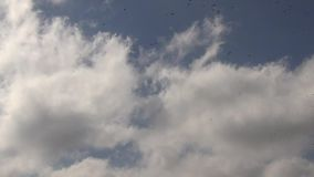 Flock of Birds in a Sky stock video footage