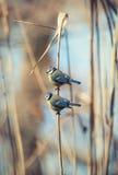 Flock of birds Stock Photography