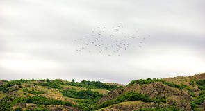 Flock of birds in springtime. beautiful landscape Royalty Free Stock Photo