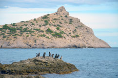 A flock of birds on a stone in the sea and Cape Kapchyk, Crimea, Novy Svet Royalty Free Stock Images