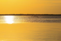 Flock of Birds in the Sunset. Flock of birds flying above the calm sea in the Florida Keys at sunset Royalty Free Stock Photography