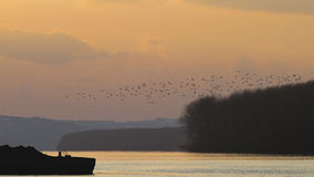 The flock of birds in the sunset Royalty Free Stock Photo