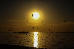 A flock of birds at sunset on the sea. A flock of birds at sunset to the sea fly Royalty Free Stock Photo
