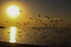 A flock of birds at sunset on the sea. A flock of birds at sunset to the sea fly Stock Photo