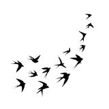 A flock of birds (swallows) go up. Black silhouette on a white background.