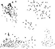 Flock of birds vector Royalty Free Stock Images