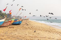 A flock of black crows flies to the sea, against a background of multi-colored boats, in India, GOA.  royalty free stock images