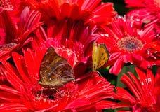 A flock of butterflies Stock Images