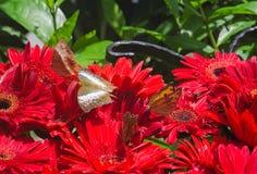 A flock of butterflies Stock Photography