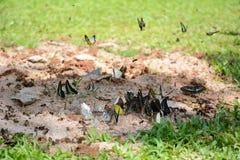 Flock of butterflies Stock Images