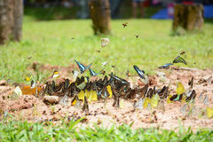 Flock of butterflies Royalty Free Stock Photos