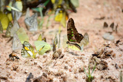 Flock of butterflies Royalty Free Stock Images
