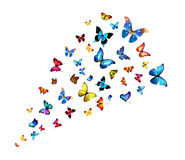 Flock of butterflies Royalty Free Stock Image