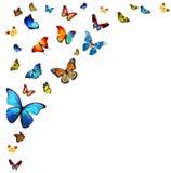 Flock of butterflies. On white Stock Photos