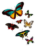 Flock of butterflies Stock Image