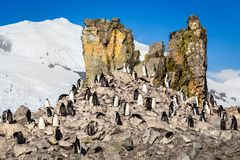 Flock of chinstrap penguins standing on the rocks with snow moun Royalty Free Stock Photography