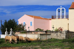 The Flock and the Church. A flock of sheep eating grass outside a church in Kefalonia, Greece royalty free stock photography