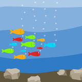 A flock of colorful fish in the water, many fish. Flat design, vector illustration, vector Stock Images