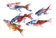 A flock of colorful small fish watercolor illustration. Flock of fish colorful spots bright colorful water neonki guppies Royalty Free Stock Photography