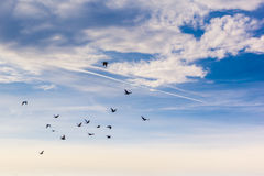 Flock Royalty Free Stock Images