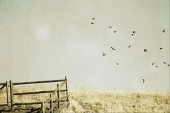 Flock of crows. Black crows fly across a meadow of grasses in a textured sky with a fence Royalty Free Stock Image