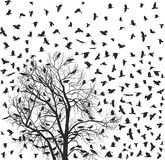 Flock of crows Stock Photos