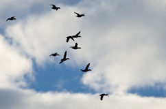 Flock of Ducks Silhouetted in a Cloudy Sky as They Fly. Flock of Ducks Silhouetted in a Blue Cloudy Sky as They Fly Royalty Free Stock Photos