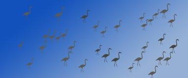Flock för grupp för flamingo för titelradbakgrundsfåglar royaltyfri illustrationer