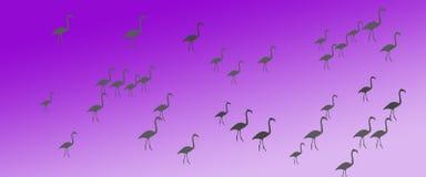 Flock för grupp för flamingo för titelradbakgrundsfåglar vektor illustrationer