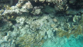 A flock of fish floating among the reefs. Slow motion stock footage