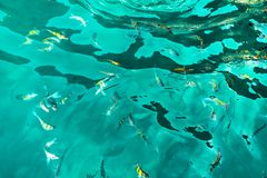 A flock of fish in sea water. Many colorful fish on the background of the sea, front focus, top view . pattern. A flock of fish in sea water. Many colorful fish stock photo