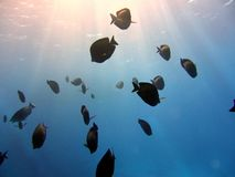 Flock fish in the sunlight Royalty Free Stock Photos