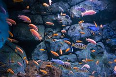 Flock of fishes Royalty Free Stock Photos