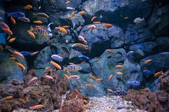 Flock of fishes Royalty Free Stock Images