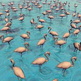Flock of flamingos - 3D render Stock Photography