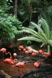 Flock of Flamingos Royalty Free Stock Photos