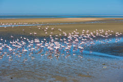 Flock of flamingos at Walvis Bay, Namibia stock photo