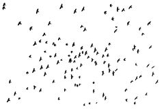 Flock of flying birds Royalty Free Stock Photos