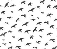 A flock of flying birds gray silhouette. Dove, seagull sketch  Stock Image