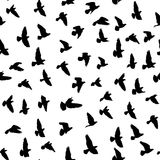 Flock of flying birds, vector seamless pattern Royalty Free Stock Photos